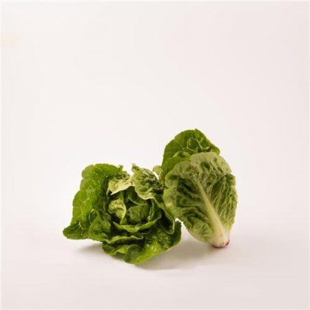 Baby Cos Lettuce Twin Pack